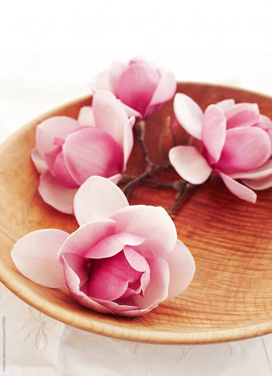Pink magnolia flowers in a wood bowl stocksy united pink magnolia flowers in a wood bowl by trinette reed for stocksy united mightylinksfo
