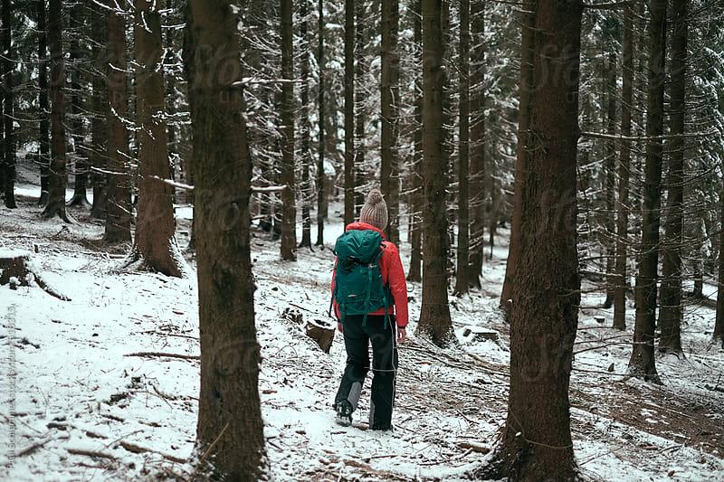 forest wanderlust by Paul Schlemmer for Stocksy United