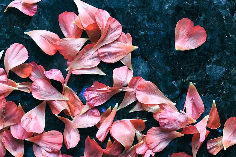 Flower petals fallen, one in shape of a heart by Monica Murphy for Stocksy United