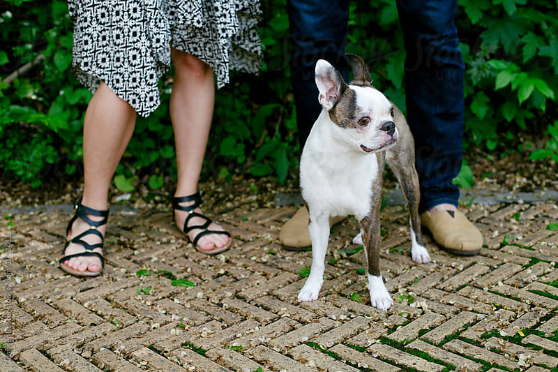 Cute dog hanging out at feet of owner's  by Jen Brister for Stocksy United