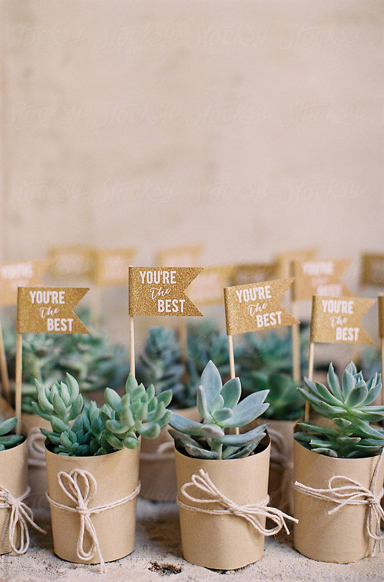 Succulent Gifts At A Wedding By Seth Mourra Gift Pot Plant Stocksy United