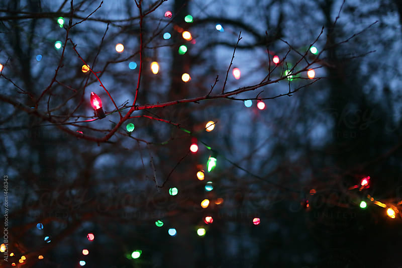 Christmas Lights In Bare Tree Branches  by ALICIA BOCK for Stocksy United