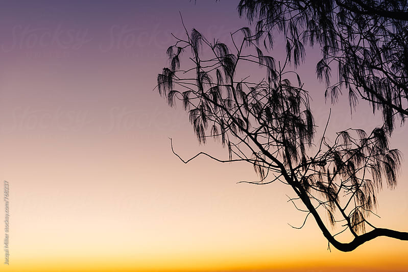 Tree Silhouette against a colourful sky at Sunset - horizontal by Jacqui Miller for Stocksy United