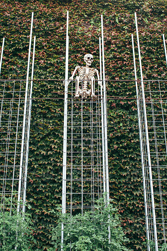 Skeleton in a garden above tomato plants and an ivy wall by Carolyn Lagattuta for Stocksy United