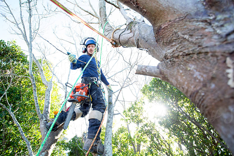 Portrait of Tree Surgeon working in the canopy of woodland trees. by Hugh Sitton for Stocksy United
