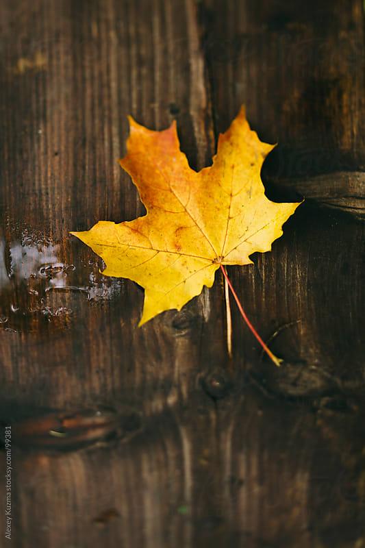 autumn by Alexey Kuzma for Stocksy United