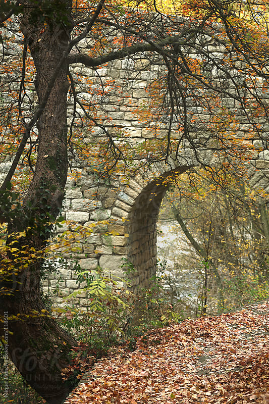 Old bridge and tree with fall leaves by Miquel Llonch for Stocksy United