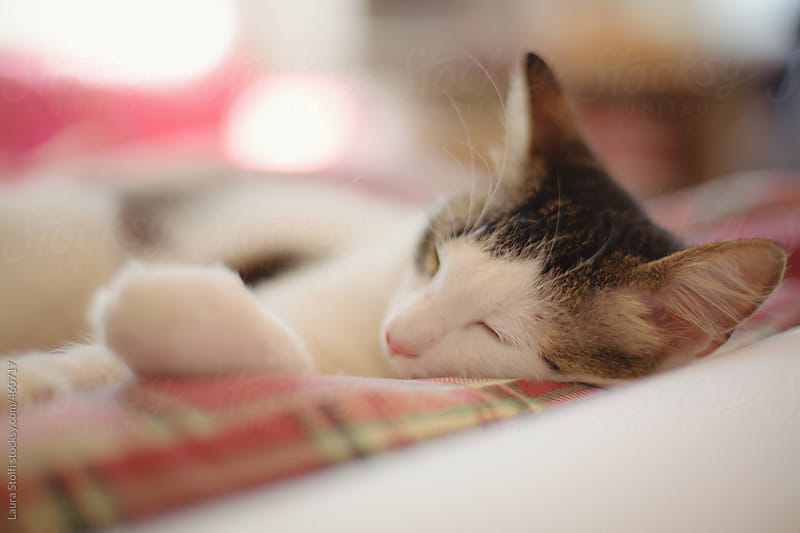 Little kitty cat sleeping blissfully on cushion indoor by Laura Stolfi for Stocksy United