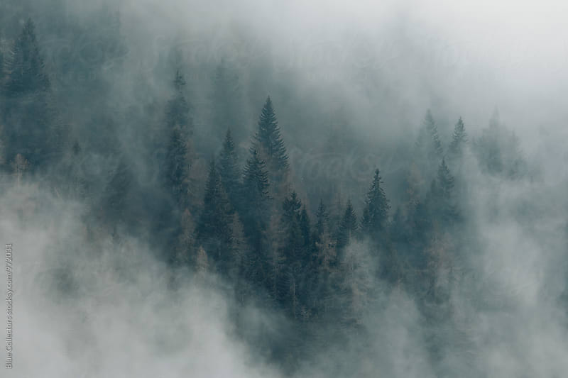 Mountain forest in the morning Mist by Blue Collectors for Stocksy United