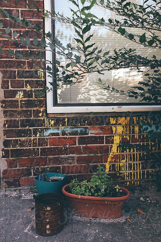 backyard by Magida El-Kassis for Stocksy United