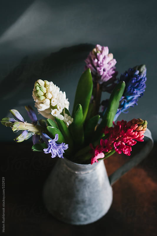 Mixed hyacinth flowers in a galvanised jug. by Helen Rushbrook for Stocksy United