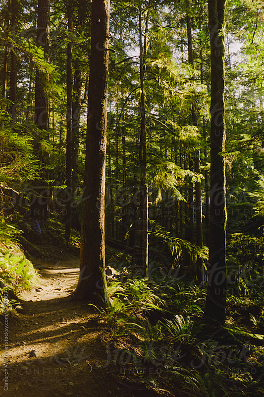 Forest Trail in British Columbia by Cameron Whitman for Stocksy United