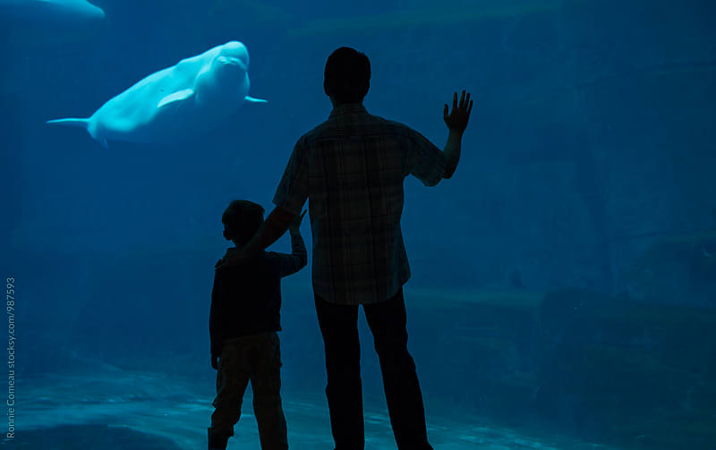 Father And Son Aquarium Trip by Ronnie Comeau for Stocksy United