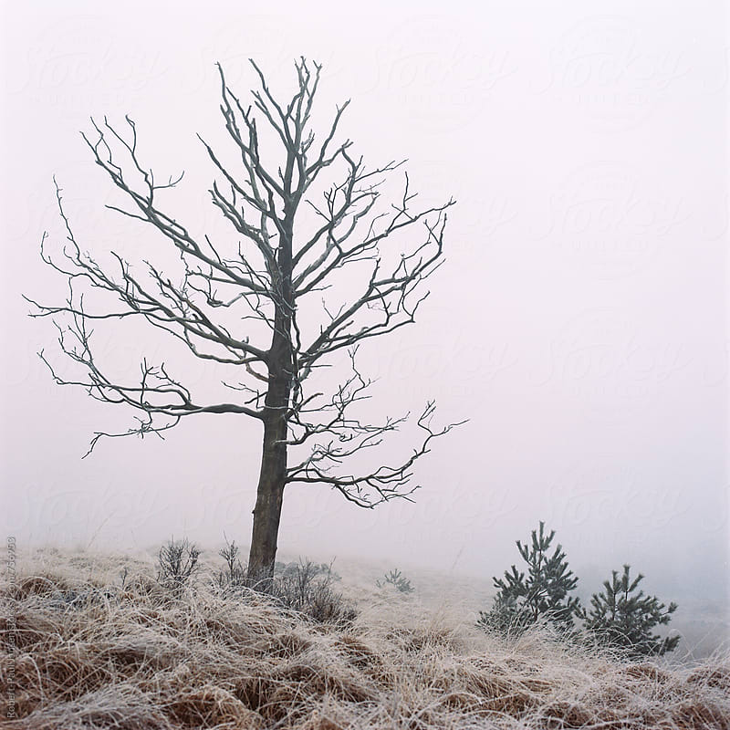 Dead tree by Robert-Paul Jansen for Stocksy United