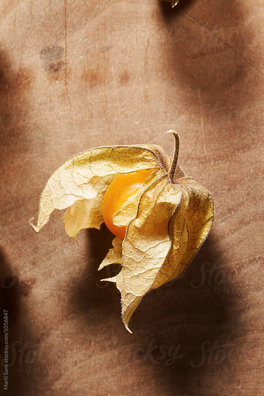 Close-up of Physalis fruit by Martí Sans for Stocksy United