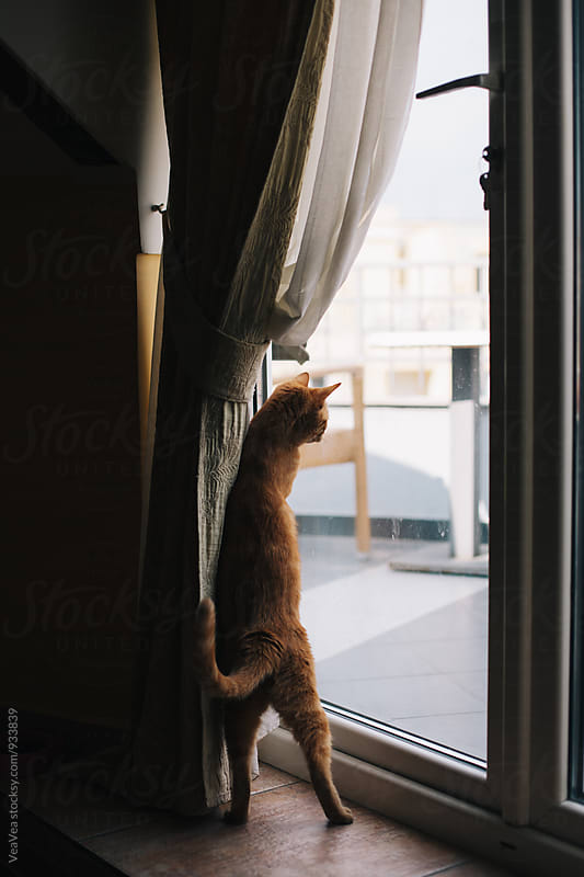 Cat standung near a window  by VeaVea for Stocksy United