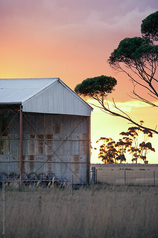Stunning Farming Lansdcape at Sunset by Rowena Naylor for Stocksy United