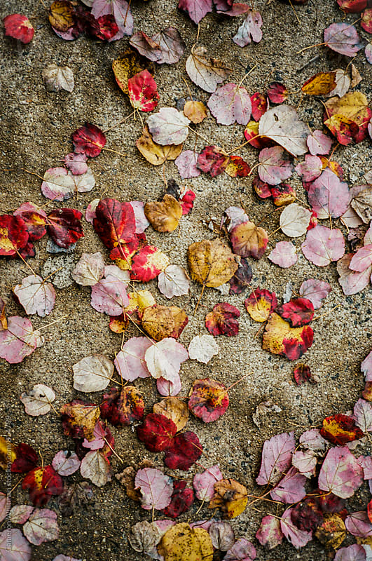 Fall Leaf Background by Cameron Whitman for Stocksy United