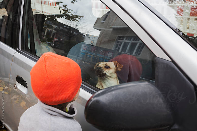Toddler looking at dog in car by Mima Foto for Stocksy United