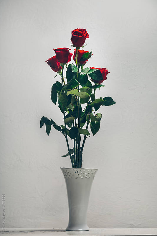 Five Red rose into Withe Ceramic Vase by HEX. for Stocksy United