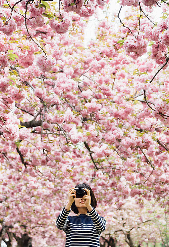 Asian woman, taking photos of cherry blossoms in spring by yuko hirao for Stocksy United