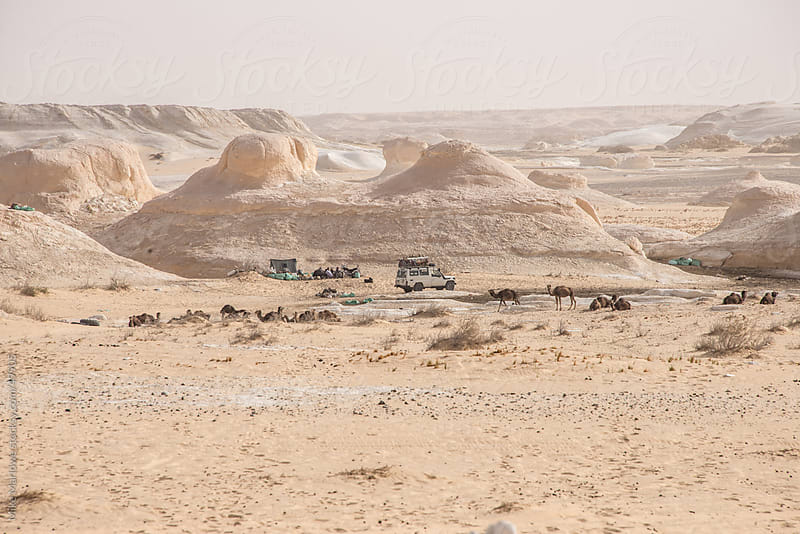 A group of travellers camping out in the desert with jeeps and camels. by Mike Marlowe for Stocksy United