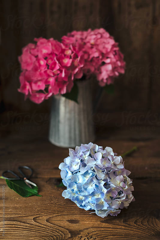 Hydrangea flowers bouquet by Pixel Stories for Stocksy United