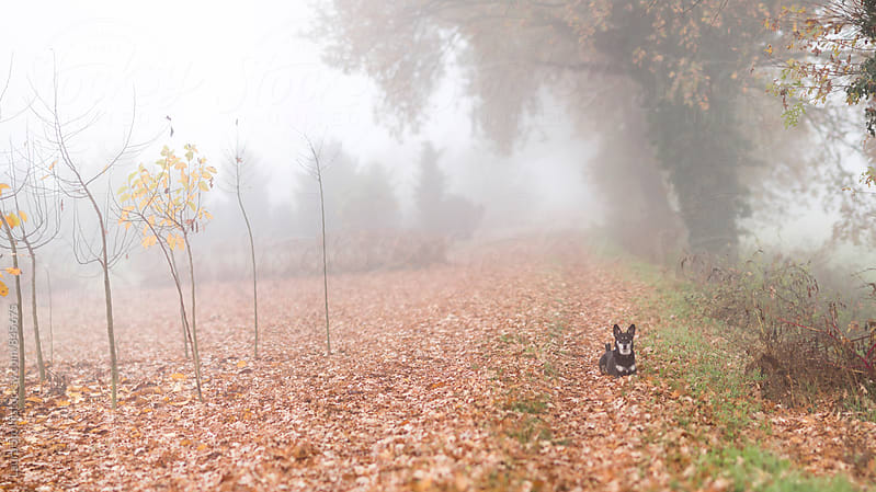 Dog laying outdoor in autumnal landscape by Laura Stolfi for Stocksy United