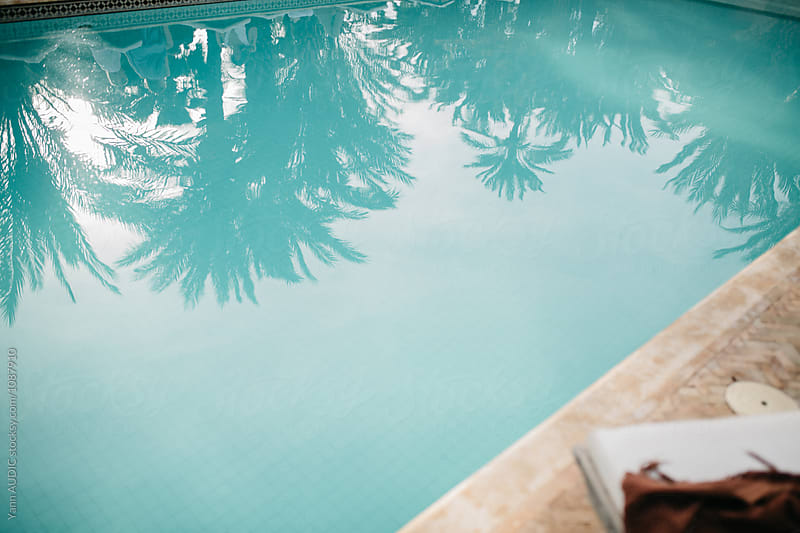 Palm Trees in the swimming pool by Yann AUDIC for Stocksy United