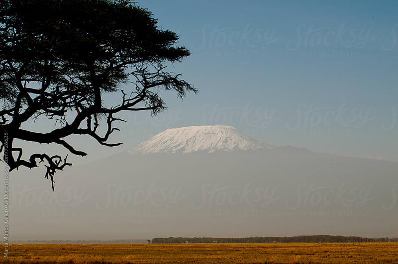 Acacia silhouette with background Kilimanjaro by Marta Muñoz-Calero Calderon for Stocksy United