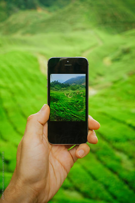 Mobile photography of tea plantation by Artem Zhushman for Stocksy United