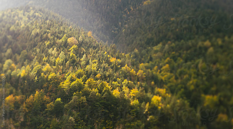 landscape with autumn forest by Javier Pardina for Stocksy United