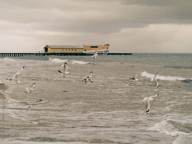 Seagulls in flight in Queenscliff, Victoria, Australia by Gary Radler Photography for Stocksy United