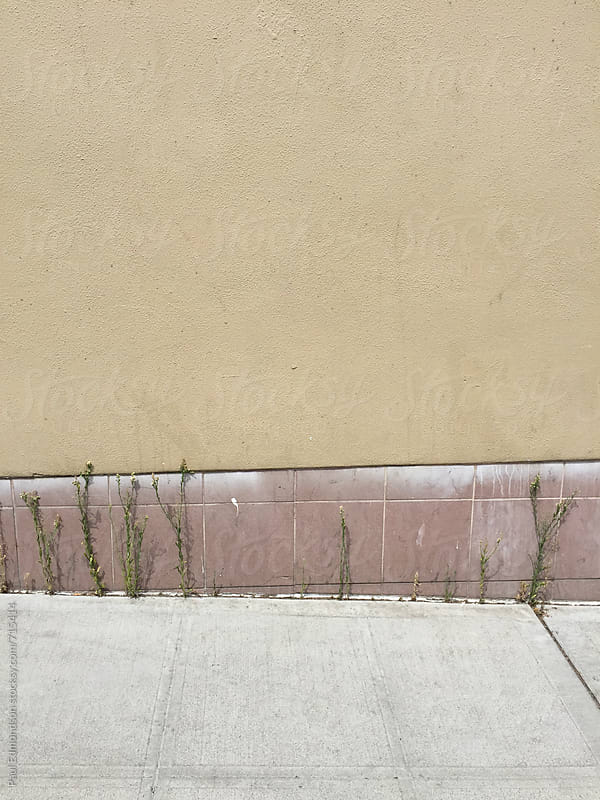 Weeds growing along urban sidewalk by Paul Edmondson for Stocksy United