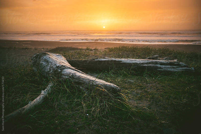 log on beach by Sam Hurd Photography for Stocksy United