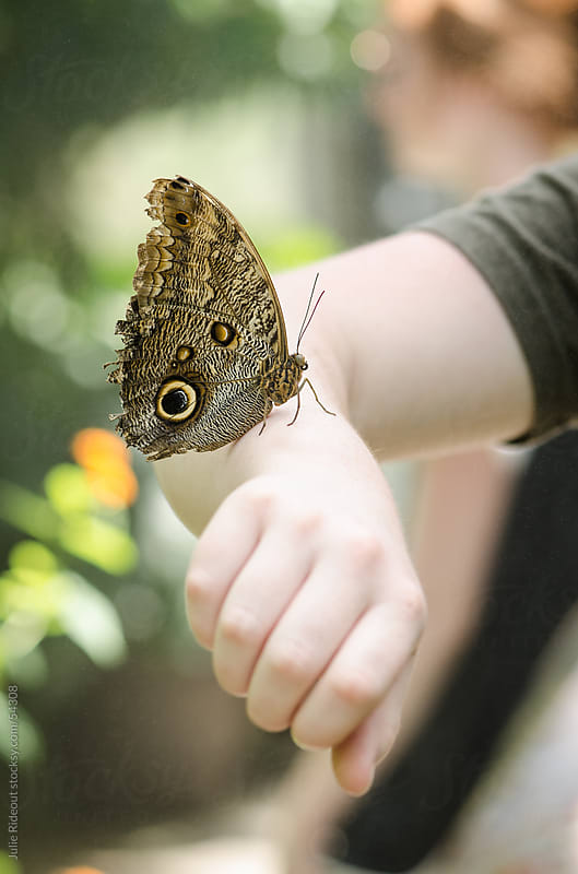 Mournful Owl Butterfly on an Arm by Julie Rideout for Stocksy United