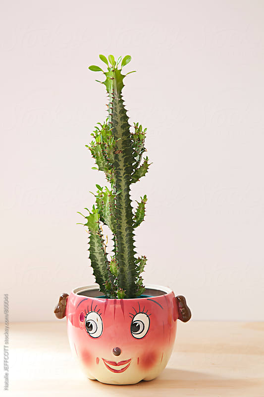 collection of succulents and cactus in quirky retro pots by Natalie JEFFCOTT for Stocksy United