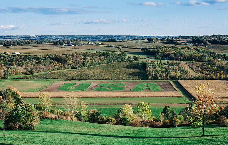 Corn Field in Upstate New York by Raymond Forbes LLC for Stocksy United