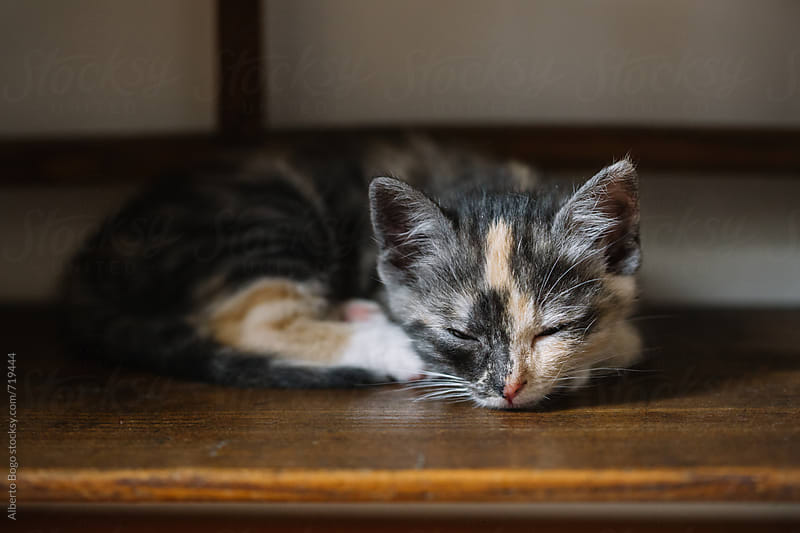 little cat sleeping on the table by Alberto Bogo for Stocksy United
