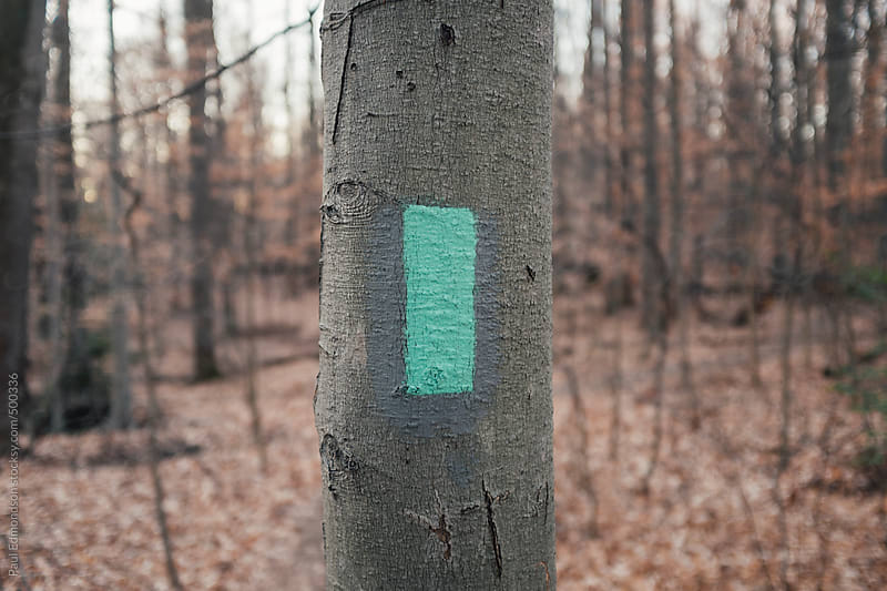 Painted trail marker on tree in forest by Paul Edmondson for Stocksy United