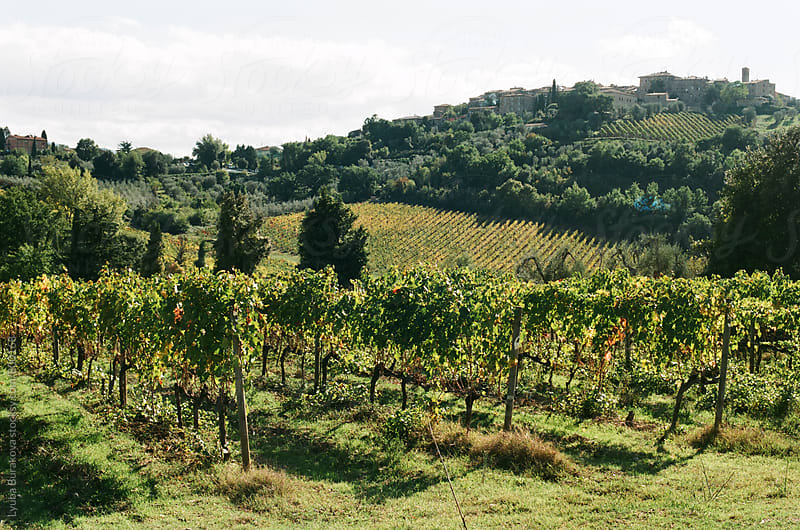 Vineyards in Tuscany by Lyuba Burakova for Stocksy United