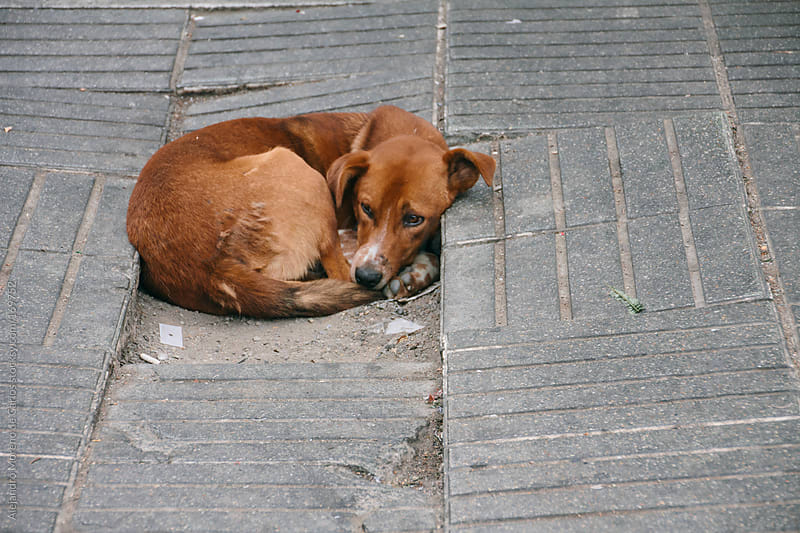 Stray dog abandoned on the street by Alejandro Moreno de Carlos for Stocksy United