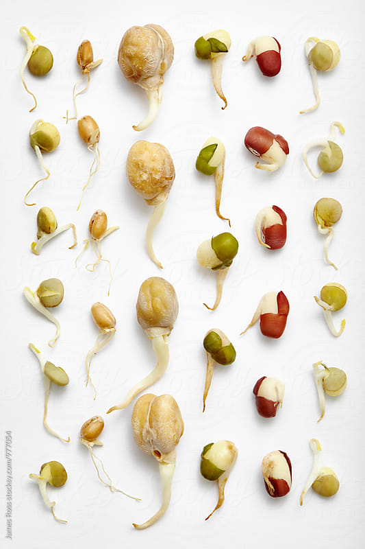 Bean sprouts by James Ross for Stocksy United