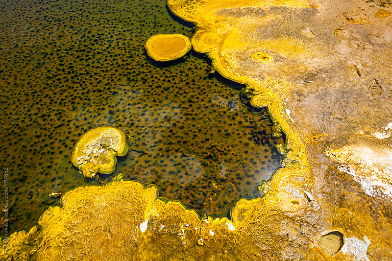 Microbial mats in geothermal pools in Yellowstone National Park by michela ravasio for Stocksy United