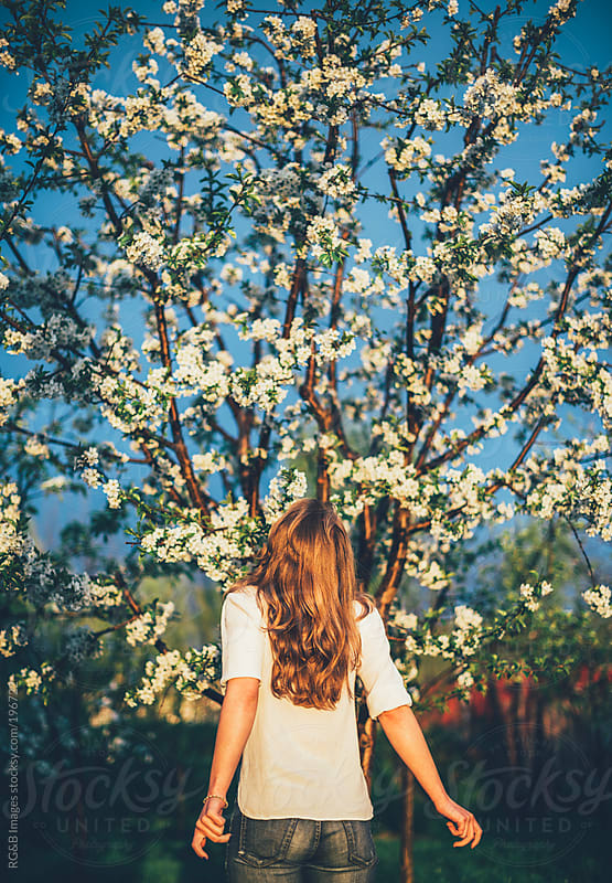 Beautiful bloomed tree  by RG&B Images for Stocksy United