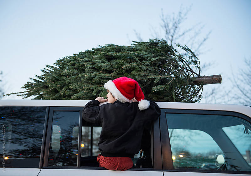 Boy wearing Santa hat helps his father strap a Christmas tree to the top of the car by Cara Dolan for Stocksy United