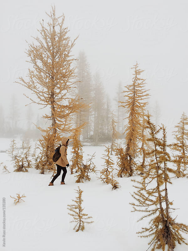 Woman Walking in Larch Trees by Kevin Russ for Stocksy United
