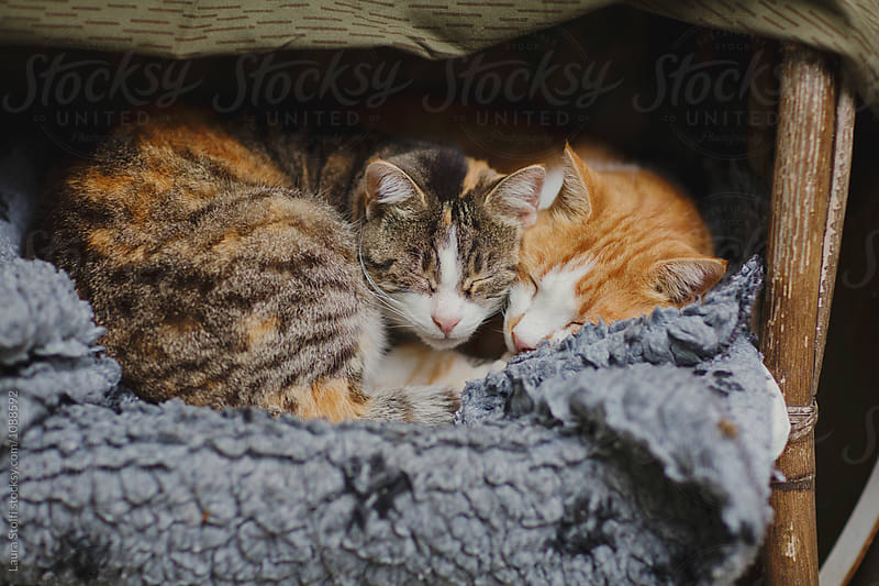 Two cats sleep holding each other under sheltered kennel in cold winter day by Laura Stolfi for Stocksy United