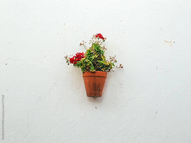Hanging plants on street walls of Almeria, Spain. by BONNINSTUDIO for Stocksy United