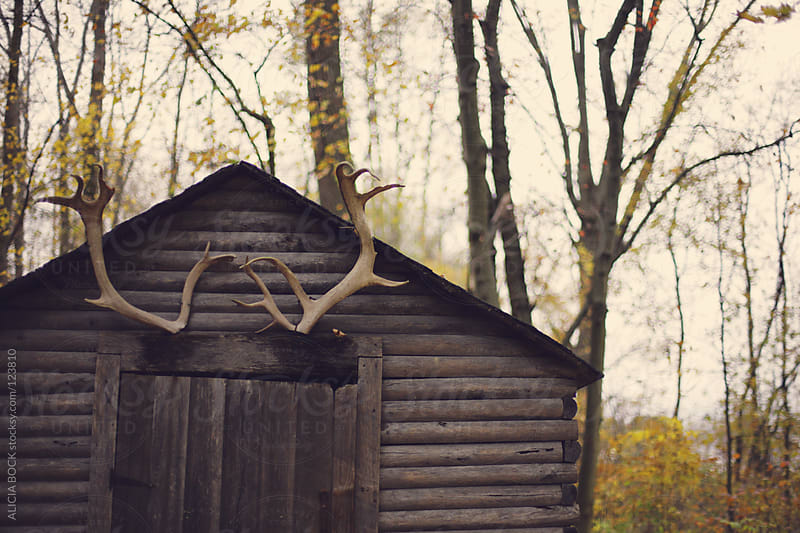 Cabin In The Woods On An Autumn Day by ALICIA BOCK for Stocksy United